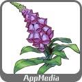ジギタリスの葉