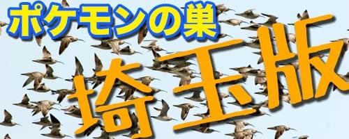 埼玉のポケモンの巣