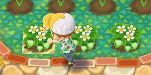 ガーデンイベント攻略5
