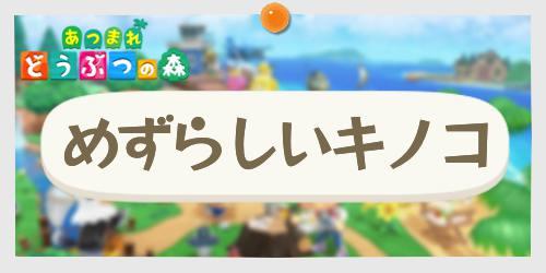 あつ森_めずらしいキノコ_banner