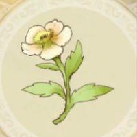清水の白姫_icon