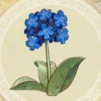 北風の花_icon