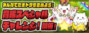 パズドラ_育成スペシャルチャレンジの攻略と報酬一覧
